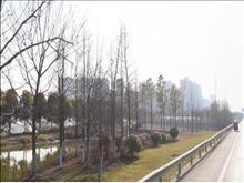 中南世纪城玺园