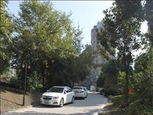 蓝湾景天实景图(30)