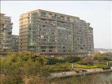 蓝湾景天实景图(3)
