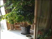 十万火急低价出租,江城花园 1900元/月 3室2厅1卫 精装修
