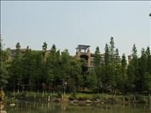 新湖明珠城实景图(39)