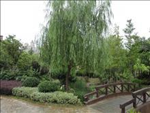 新湖明珠城实景图(10)