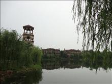 新湖明珠城实景图(9)